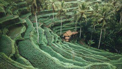 Info Wisata Tegallalang Rice Terrace Ubud Bali - Dewata ID