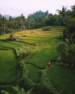 Informasi Lengkap Wisata Sawah Tegallalang Rice Terrace Ubud Bali - Dewata ID