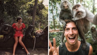 Wisata Monkey Forest Ubud Instagramable Lokasi Ikonik