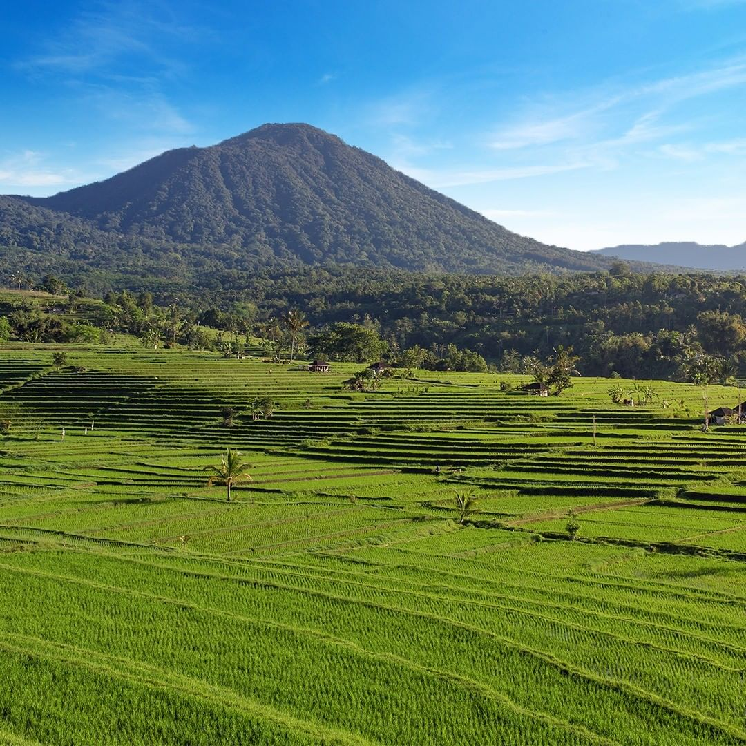 Jatiluwih Rice Terrace UNESCO Tabanan Bali - Dewata ID
