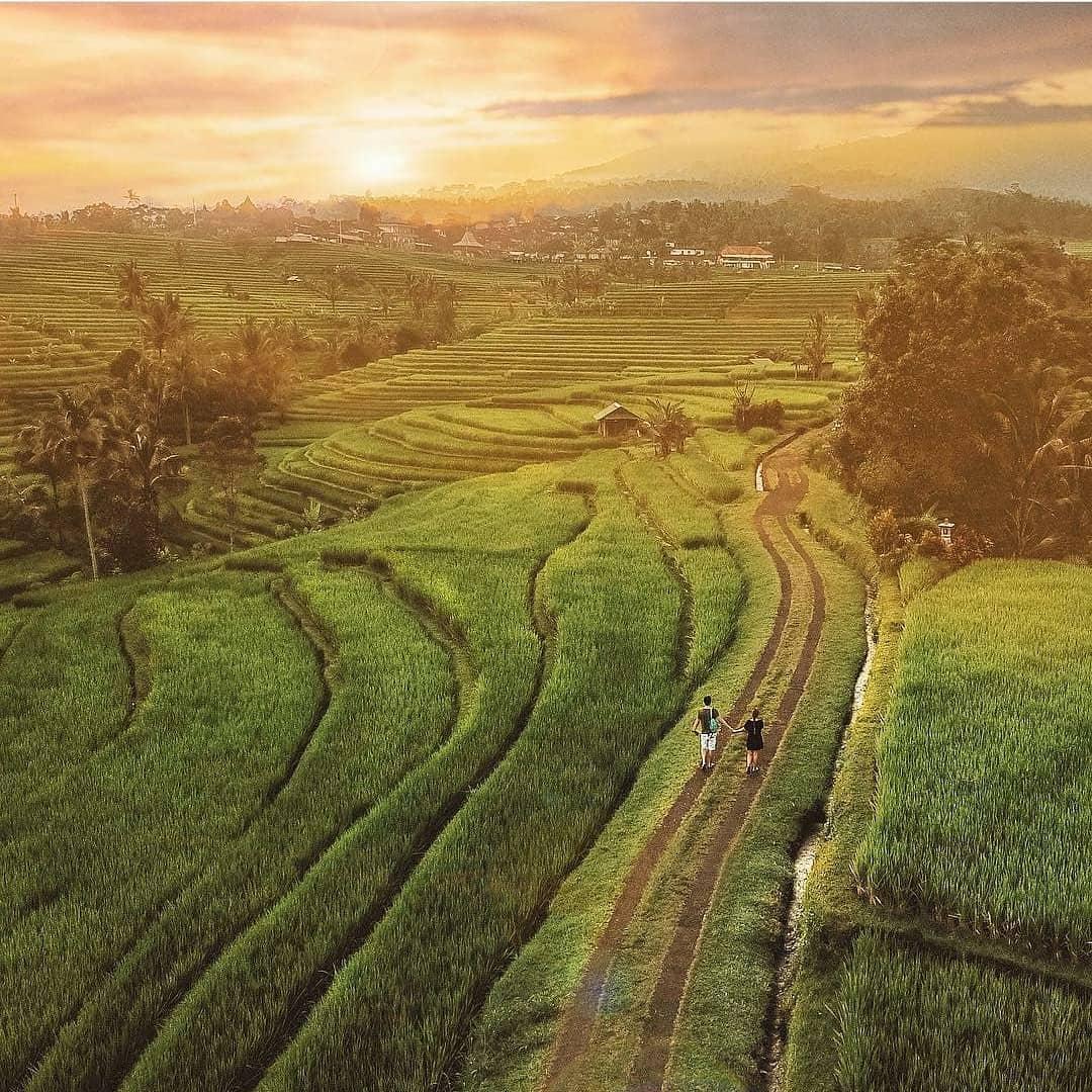 Jatiluwih Rice Terraces Tabanan Bali - Dewata ID